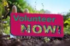 volunteer now